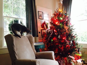 HGH_tree and cat